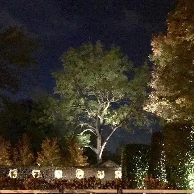 Night shot of trees lit at Valley Rock Inn & Mountain Club